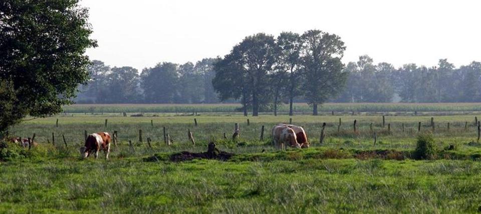 Banner für Feuchtwiesen im nördlichen Münsterland