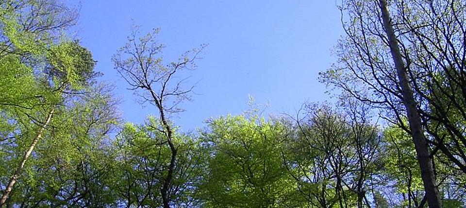 Banner für Kalkbuchenwälder bei Hohenlimburg