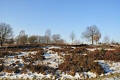 Trupbacher Heide im Winter © Peter Fasel