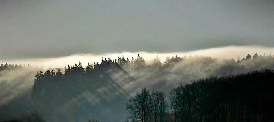 Im Teutoburger Wald  © blick4