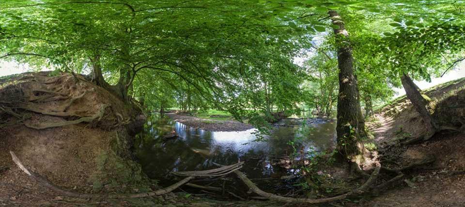 Brander Wald © NABU NRW