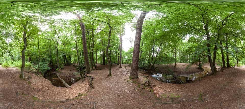 Hiesfelder Wald © NABU NRW