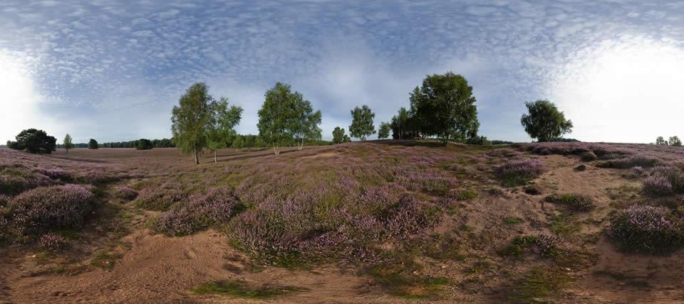 Westruper Heide © NABU NRW