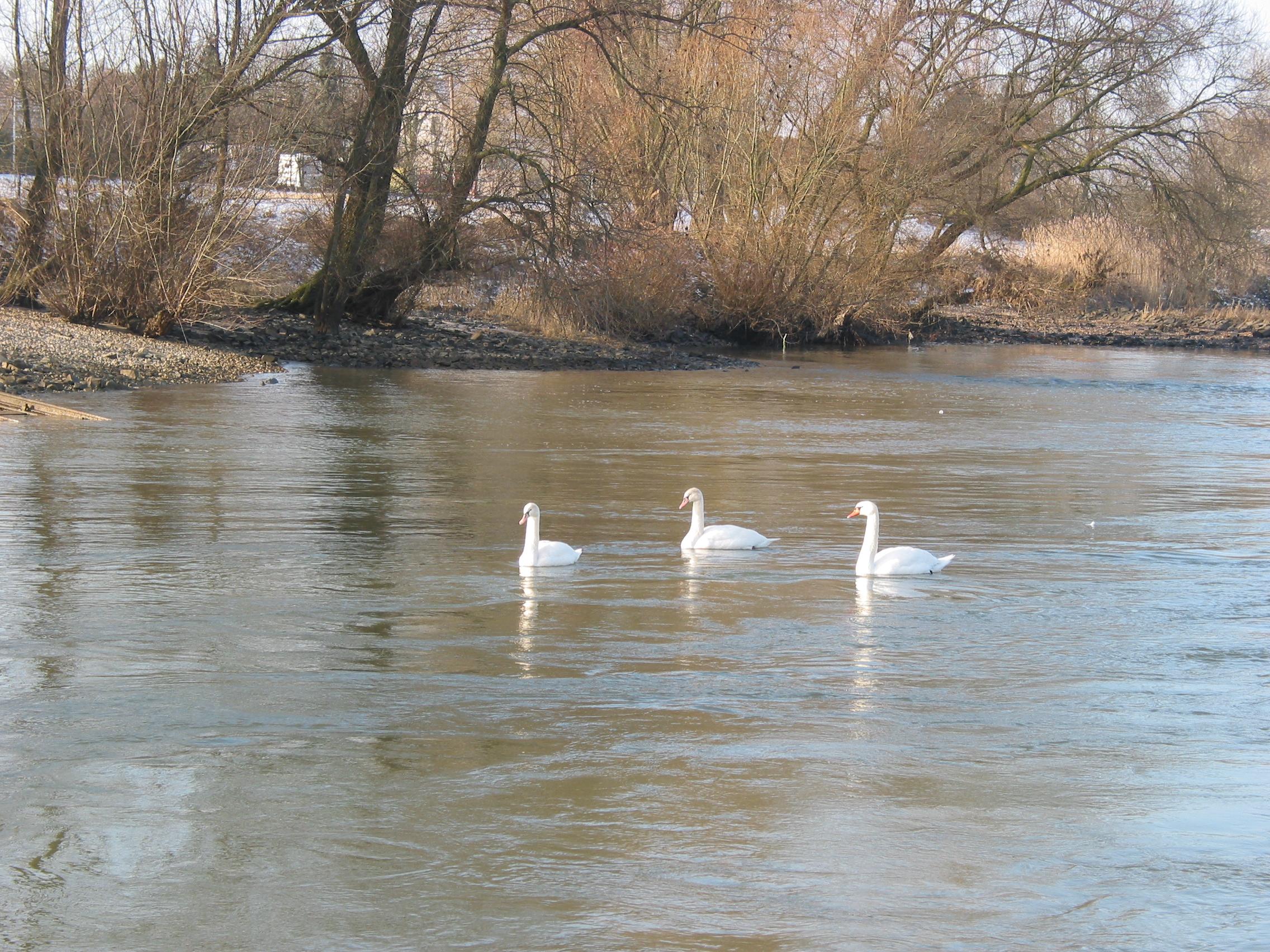 Ohligser Heide: Natur erleben NRW